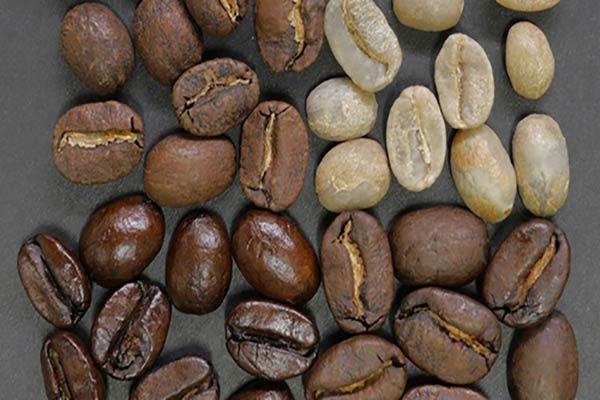 قهوه هندی روبوستا