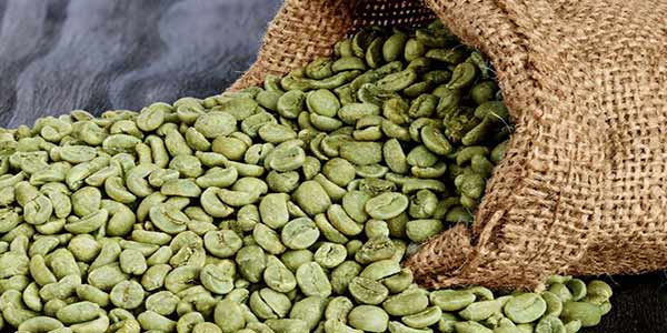 فروش انواع قهوه سبز