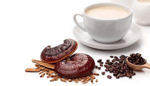 خرید قهوه قارچ گانودرما