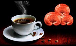 قهوه گانودرما
