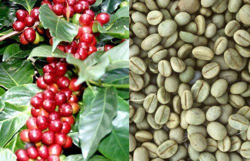 قیمت انواع قهوه