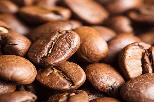 واردات قهوه عربیکا فله