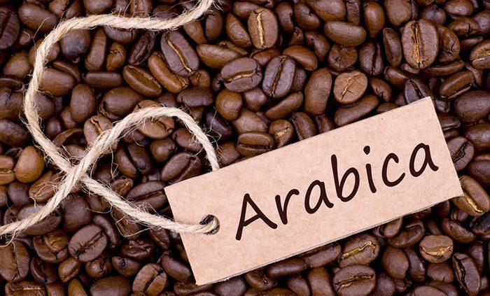 فروش دانه قهوه عربیکا برزیل عمده